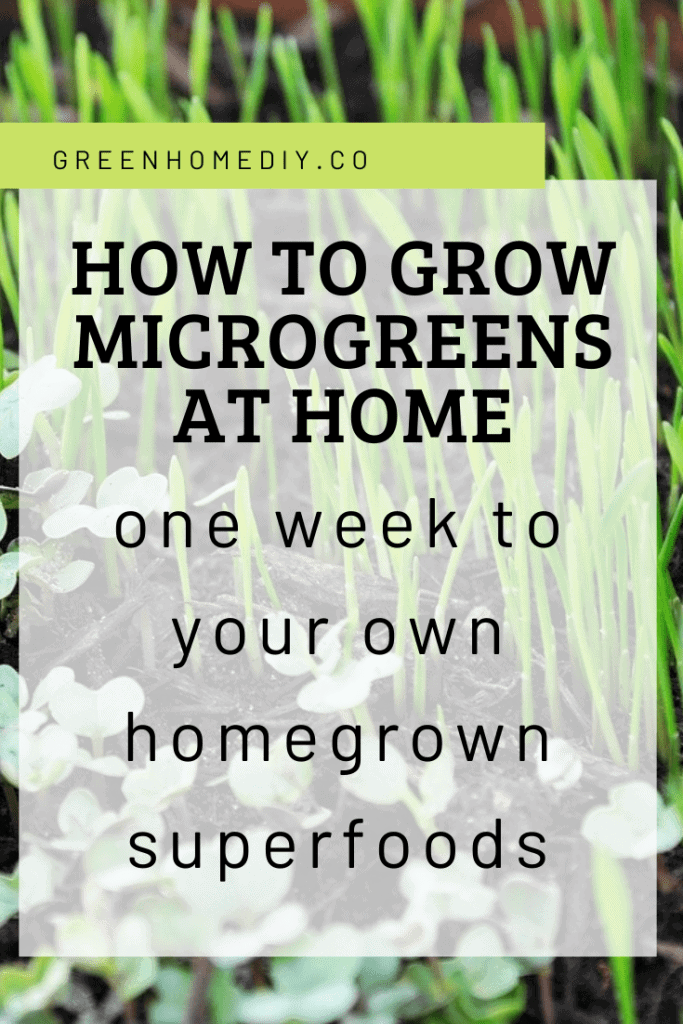 How to grow microgreens at home: One week to your own homegrown superfoods