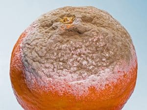 Moldy food waste orange.