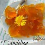 Dandelion Gelatin from Homestead Lady