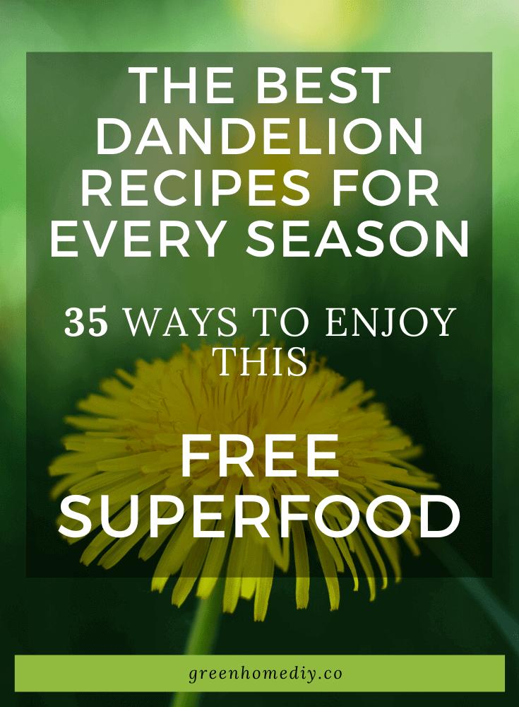 Dandelion recipes for every season