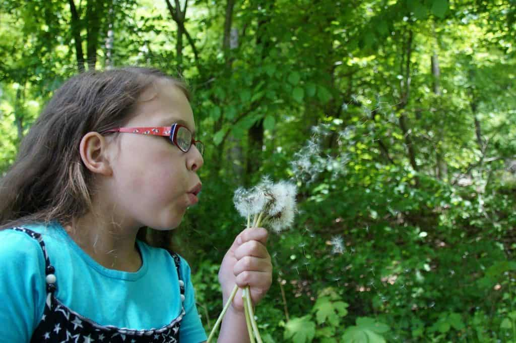 Kid blowing dandelion puffs. Imge by Brian Holmes Pixabay
