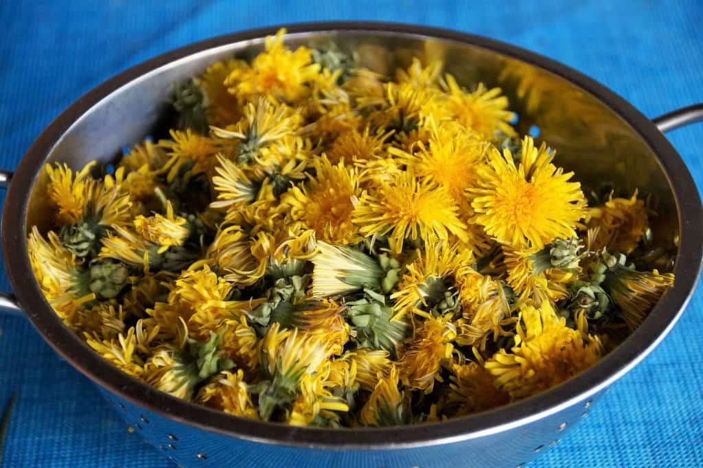dandelion flowers in bowl ivabalk on pixabay