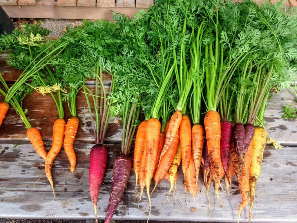 Zero food waste recipe for carrot tops